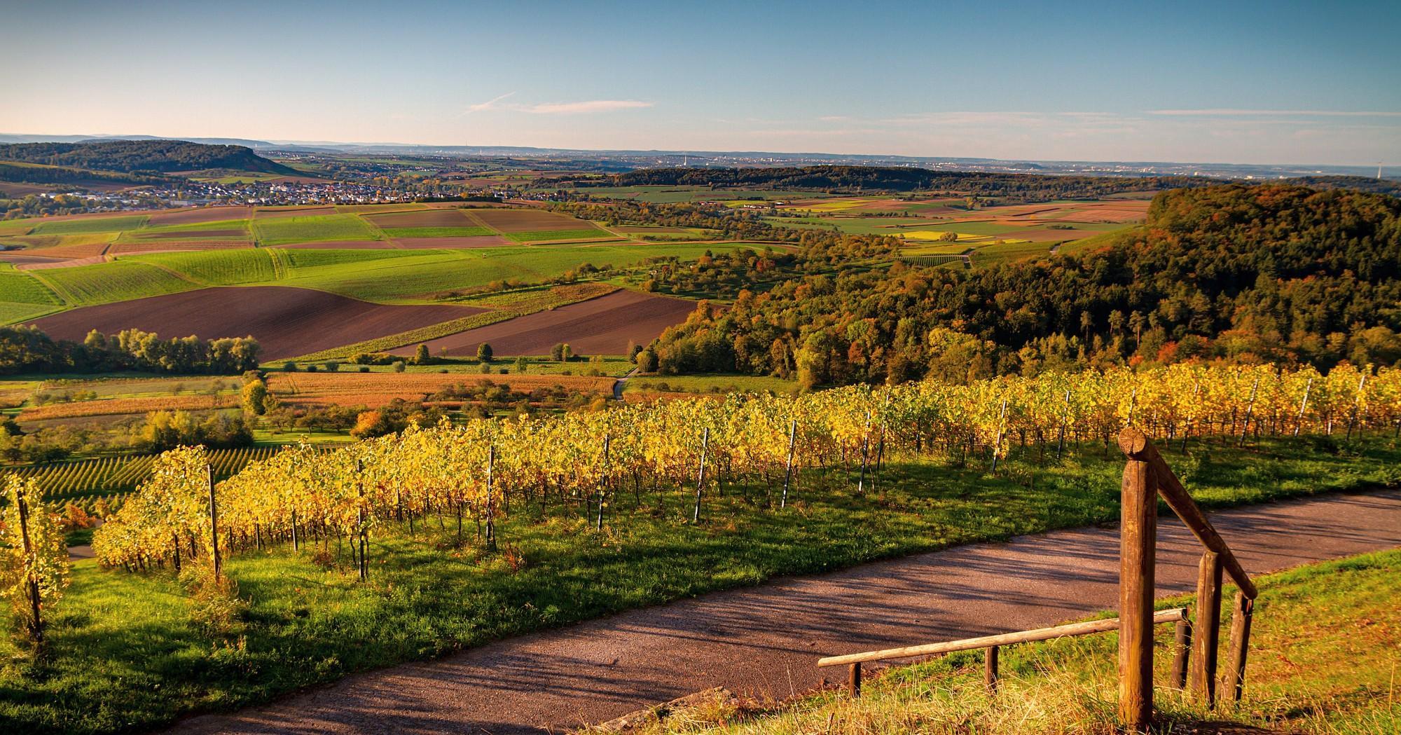 Landschaft, Weinberge und Felder bei Stuttgart
